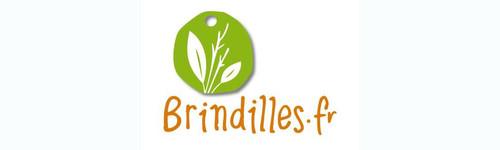 www.brindilles.fr